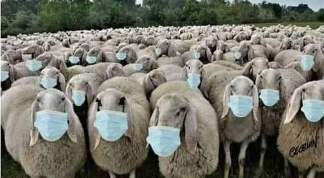 Falsa pandemia y manipulación social | El Manifiesto